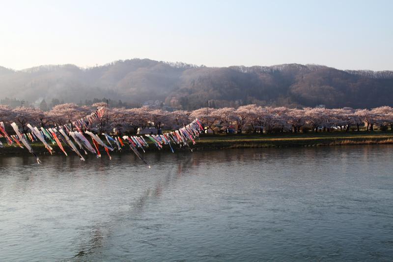 北上市展勝地桜まつり 2014 2014/04/29
