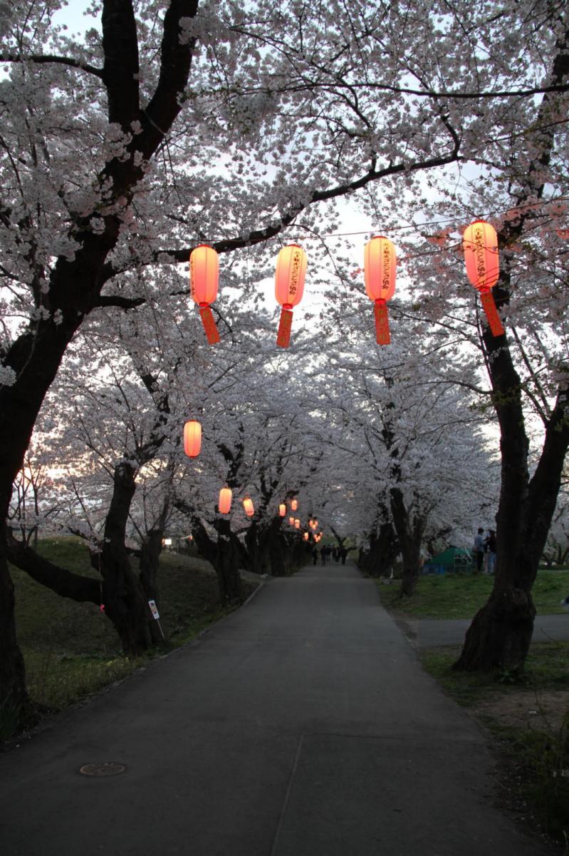 北上市展勝地桜まつり 2017 2017/04/23-29