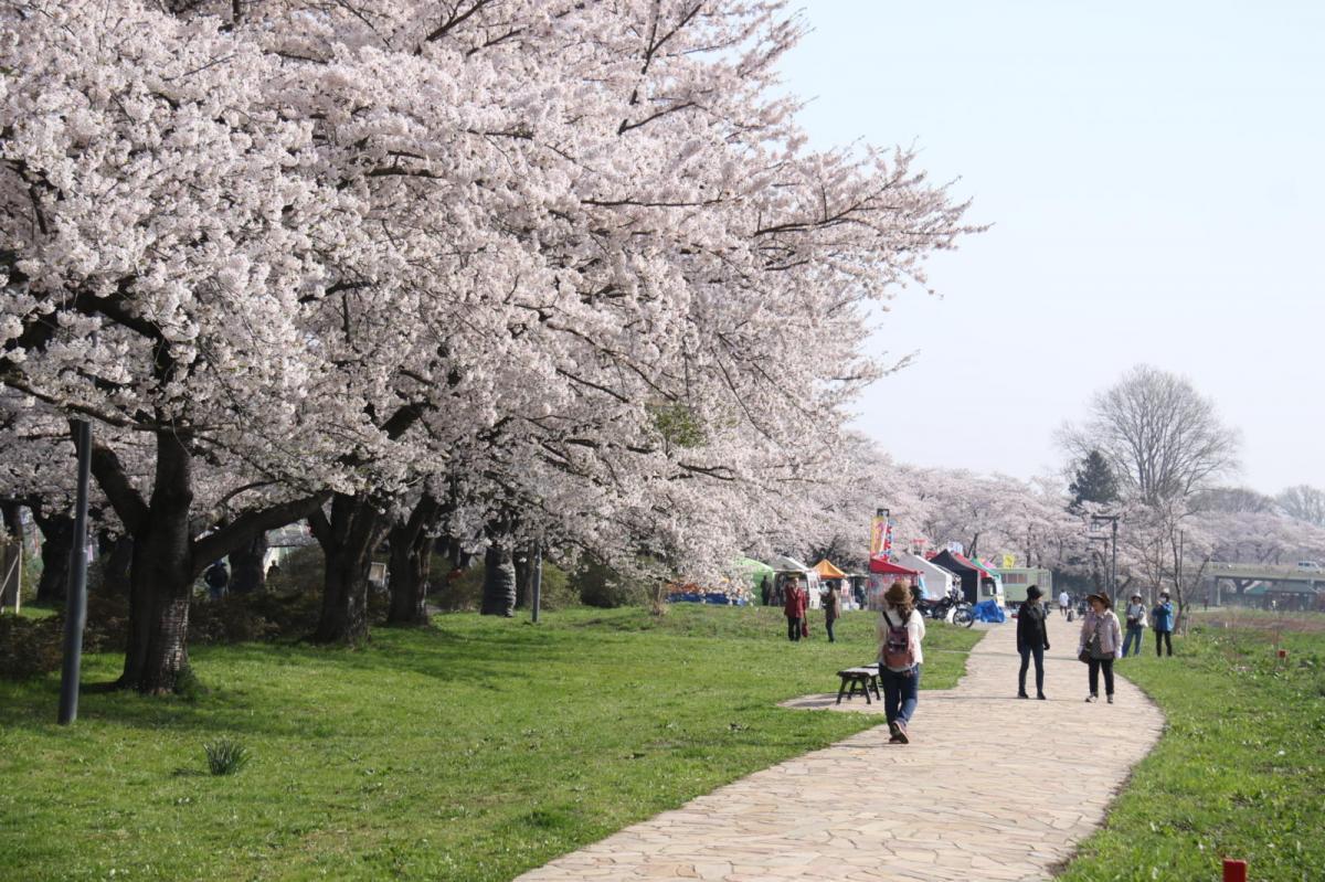 北上市展勝地桜まつり 2018 2018/04/21-29