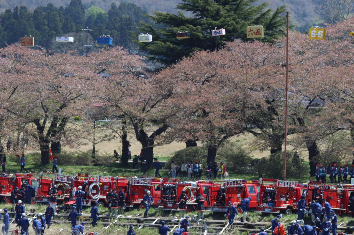 北上市展勝地桜まつり 2019 2019/04/21-29
