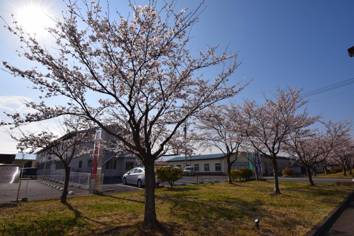 奥州市前沢アスティ商店会さくらのライトアップ 2019/04/19